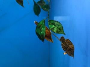 サンピアザ水族館のリーフフィッシュ