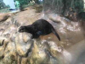 サンピアザ水族館のカワウソ