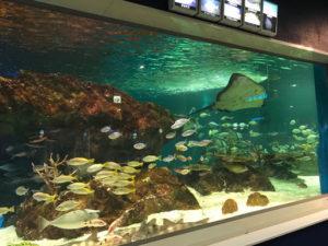 サンピアザ水族館の回遊水槽