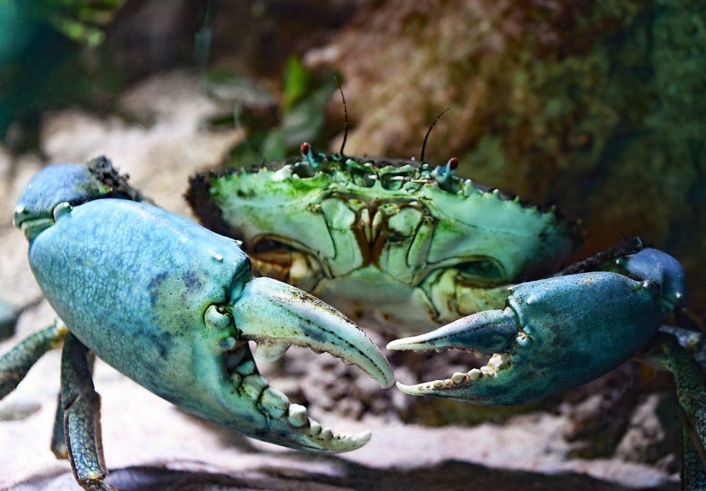 沖縄のマングローブカヌーがおすすめ!子供と一緒に体験可能!_3