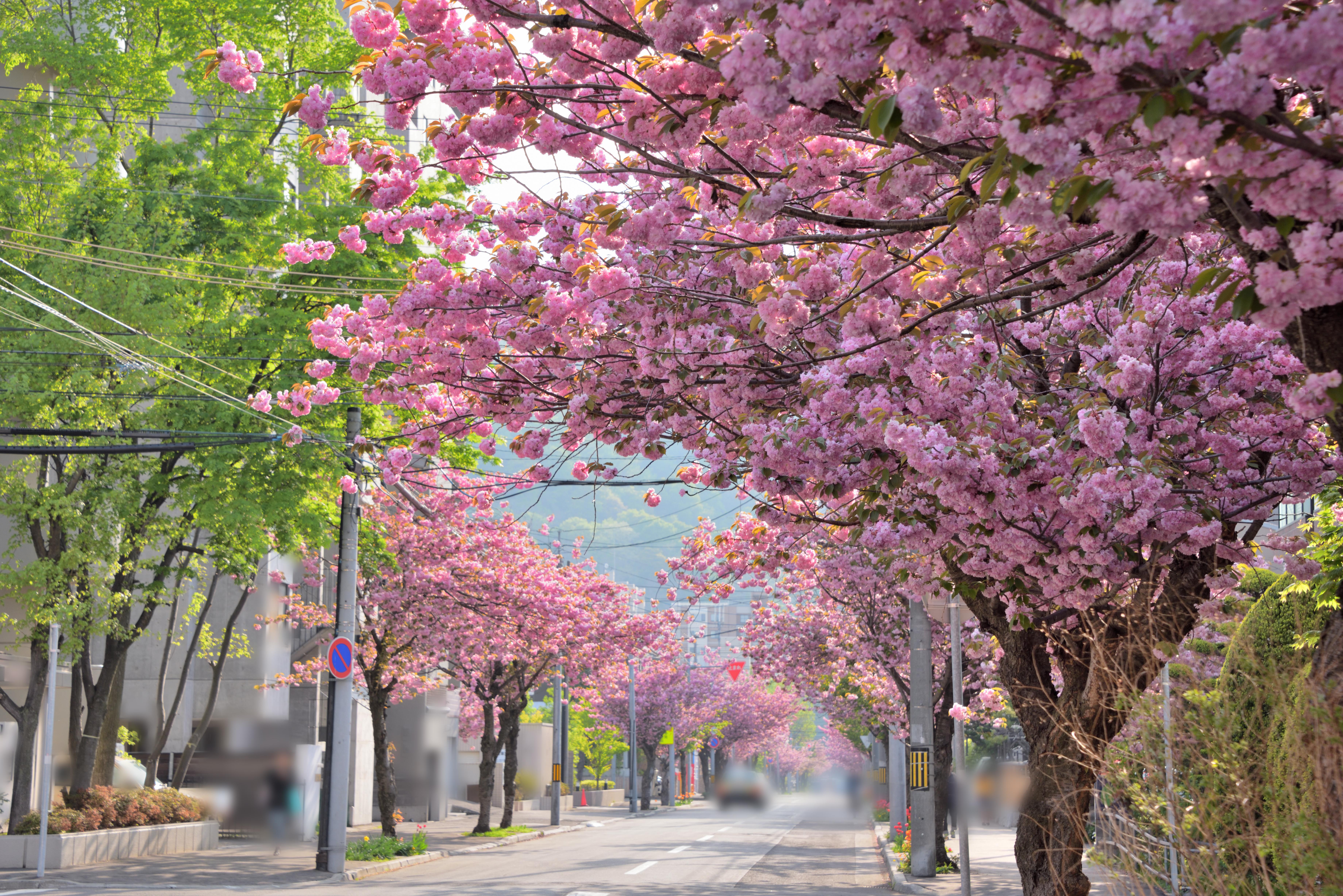 札幌円山公園での花見はジンギスカンセット一式レンタルがおすすめ!_3