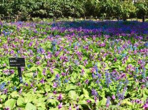 札幌豊平公園は花や緑が豊富!桜を見に行くためアクセス方法や豊平公園情報を調査!_2