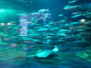 おたる水族館の海のパノラマ回遊水槽