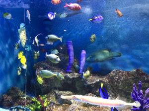 おたる水族館の魚達