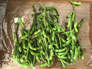 八紘学園農産物直売所で購入した枝豆