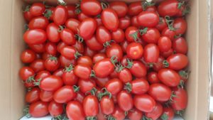 「あったかふぁーむ」のきらめきトマト