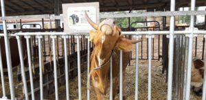 ハイジ牧場の馬